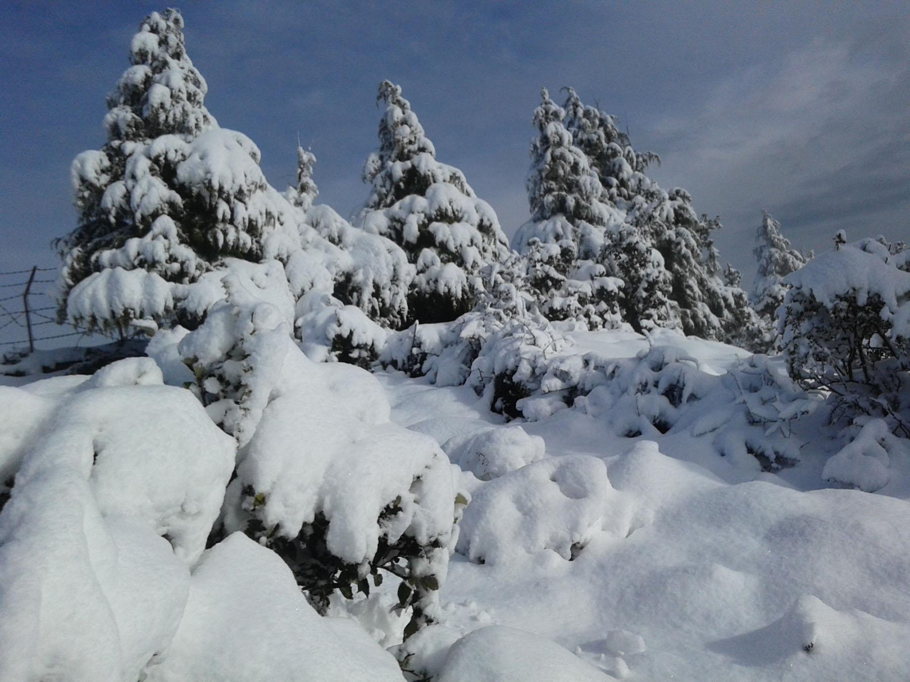 बैतडीको सतबाँझ क्षेत्रमा हिमपात
